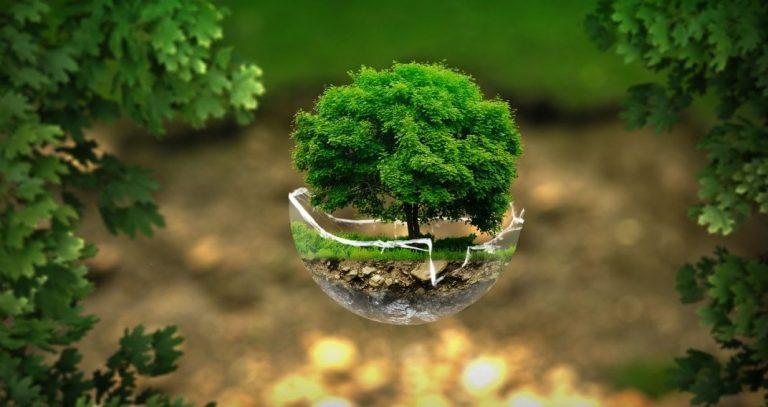 Pinel écologique 2021